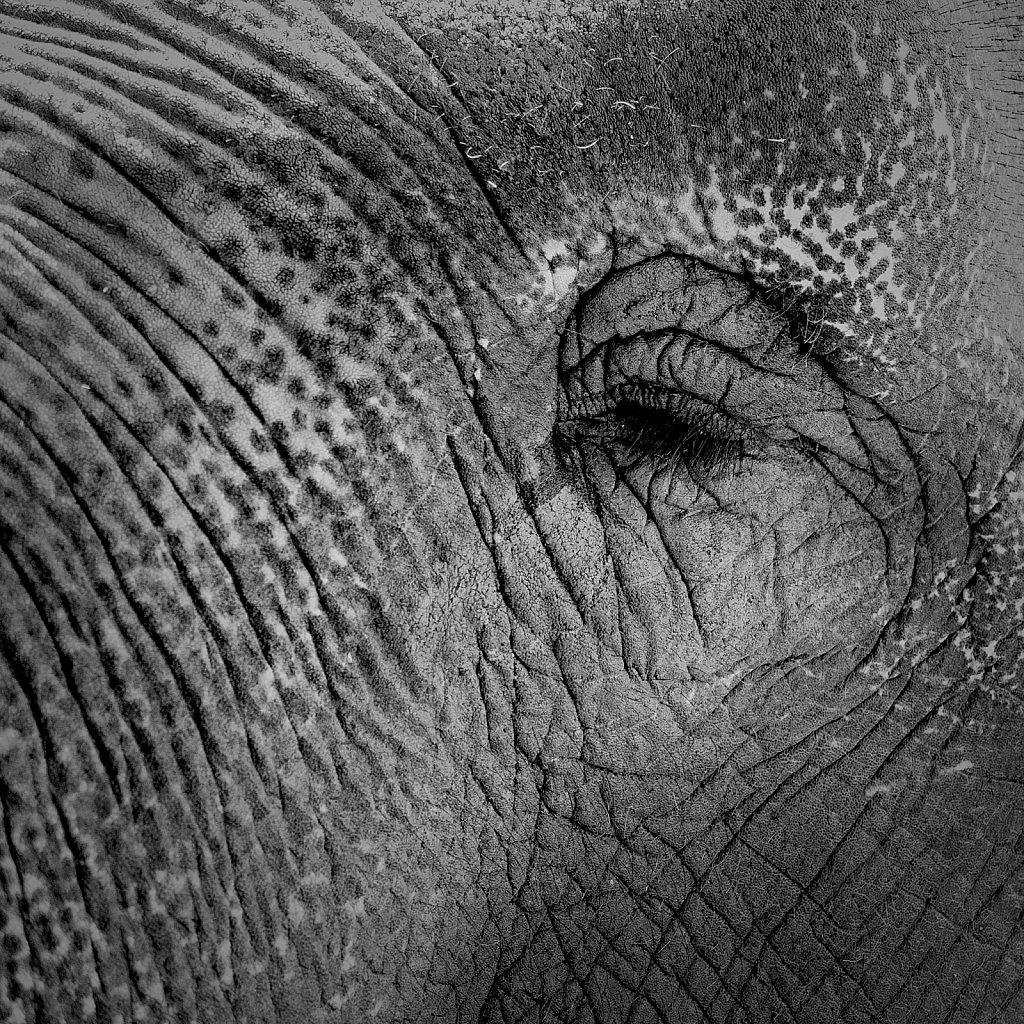 Gris gris l'éléphant !